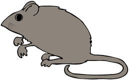 Field Mouse. This illustration depicts a brown field mouse on its hind legs Royalty Free Stock Photo