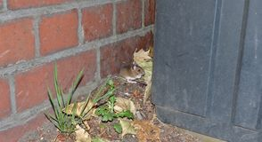 Field mouse behind a bin while waiting for a bus, photo taken in the UK stock photo