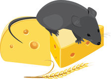 Field mouse, wheat ear and pieces of cheese Royalty Free Stock Image
