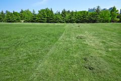 Field of mowed grass Royalty Free Stock Photos