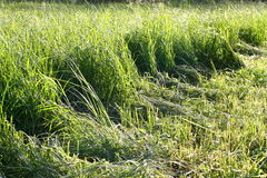 A field. The mown grass on the field Stock Images