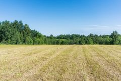 A field of mown grass against a blue sky and a forest in good weather stock photo