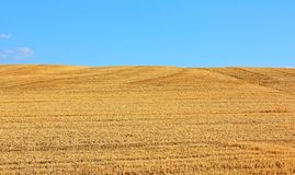 The field of mown wheat Royalty Free Stock Photo