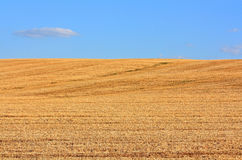 The field of mown wheat Stock Photos