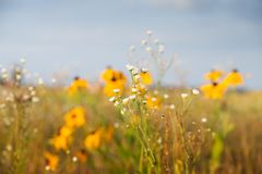 Field with multicolored flowers. Beautiful summer landscape of blossoming field royalty free stock photography