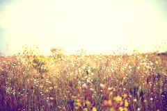 Field with multicolored flowers. Beautiful summer landscape of blossoming field stock image