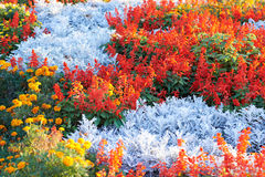 Field of multicolored flowers Stock Photo