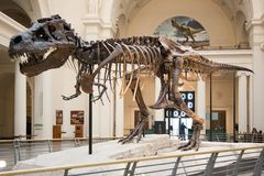 The Field Museum Royalty Free Stock Photography