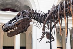 The Field Museum Royalty Free Stock Photos
