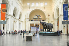 Field Museum of Natural History in Chicago Stock Photos