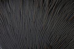 Field Mushroom Royalty Free Stock Image
