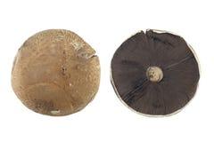 Field Mushroom Stock Photos