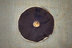 Field Mushroom Stock Images