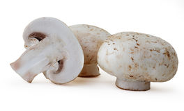 Field mushrooms Stock Photo