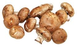 Field mushrooms Royalty Free Stock Photography