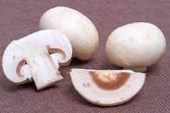 Field mushrooms on brown Royalty Free Stock Image