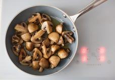 Field mushrooms Stock Photo