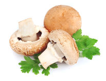Field mushrooms with greens Royalty Free Stock Image