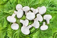 Field mushrooms on lettuce. Field mushrooms on the lettuce Royalty Free Stock Photo