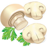 Field mushrooms and parsley. Field mushrooms and green leaf parsley Stock Photo