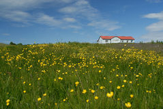 Field in Myrar area, Iceland Royalty Free Stock Photos