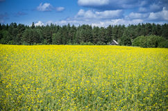 Field Near Forest Stock Image