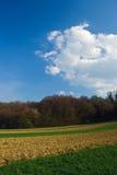 Field near forest Stock Photo