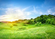 Field near and forest. Green field near the forest at sunset Stock Photography