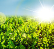 Field of new spring green grass Stock Photography