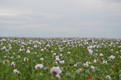 Field with nice flowers. Photo of a field with nice flowers in Czech republic stock image