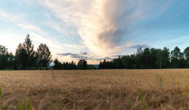 Field in Norway Stock Image