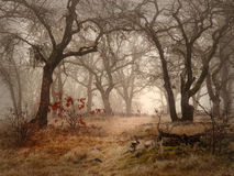 Field and oak woods on foggy day Stock Images