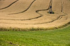 Field in oats Stock Photography