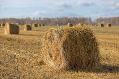 Field with oblique hay Royalty Free Stock Image