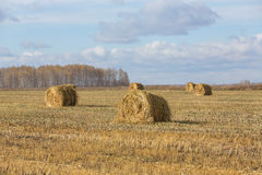 Field with oblique hay Stock Photography
