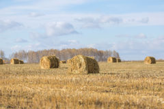 Field with oblique hay Stock Photos