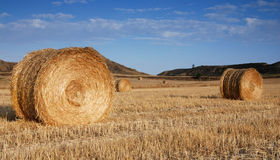 Field Of Hay Bales Royalty Free Stock Images