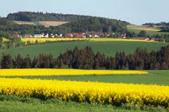 Free Field Of Rapeseed, Canola Or Colza Royalty Free Stock Image - 108264366