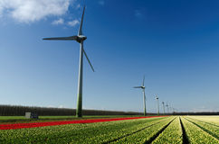 Field Of Red And White Tulips And Wind Turbines