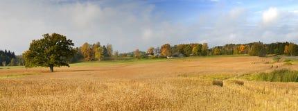 Field Of Ripe Barley Stock Photography
