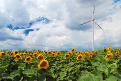 Field Of Sunflowers And Wind Turbine Royalty Free Stock Image
