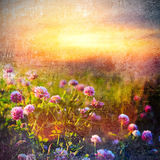 Field Of Wild Flowers Stock Photography