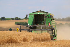 Field of oilseed rape. Combine machine cuts the field of oilseed rape Royalty Free Stock Images
