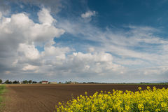 Field of oilseed rape Stock Images