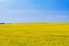 Field of oilseed rape under dramatic sky Stock Image