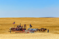 In the field with old style harvesting. Stock Photos
