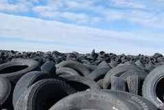 Field of old tires. Old tires in a field stock photos