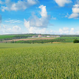 Field and orthodox temple against the blue sky Royalty Free Stock Photo