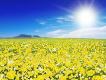 Field Over Blue Sky. Yellow Floral Field Over Blue Sky Royalty Free Stock Image