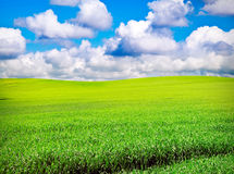 Field over cloudy blue sky Royalty Free Stock Photo